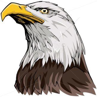 Bald Eagle on White - Martin Malchev