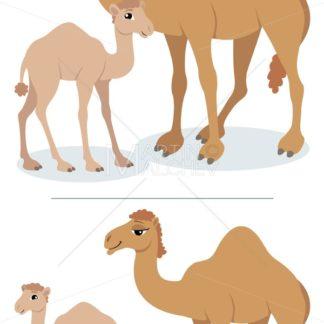 Camels - Martin Malchev