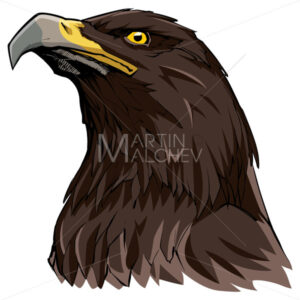 Golden Eagle on White - Martin Malchev